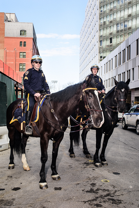 Robert-Paul-Cohen-nypd-mounted-police-horses-the-observer (7 of 17)